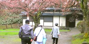 弘前城さくら祭りの様子
